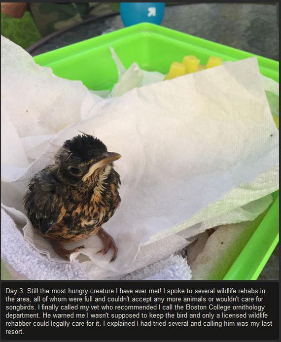 baby_bird_success