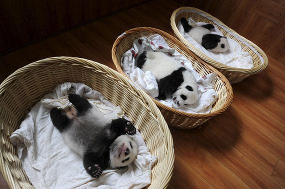 baby_panda_basket