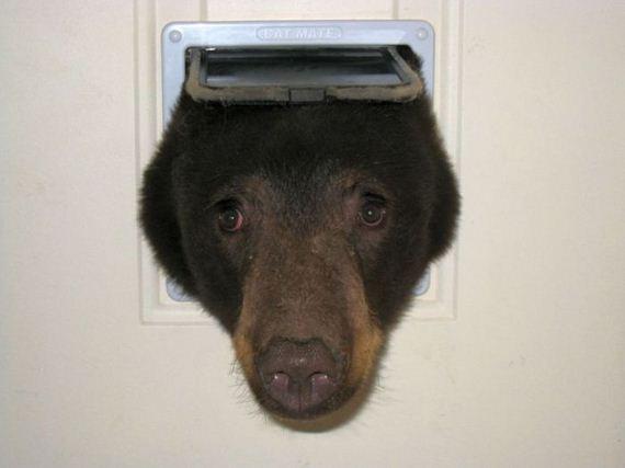 bear_idaho