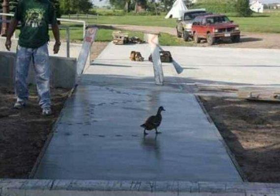 birds-being-aholes
