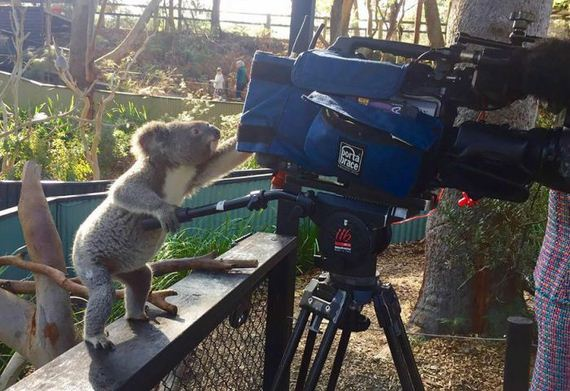 cameras_animals_helping