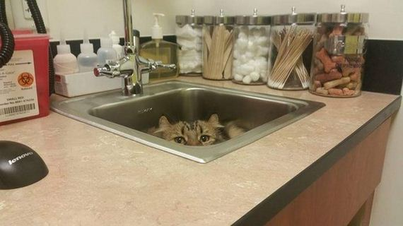 cats_hiding_from_vet