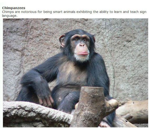 clever_animals