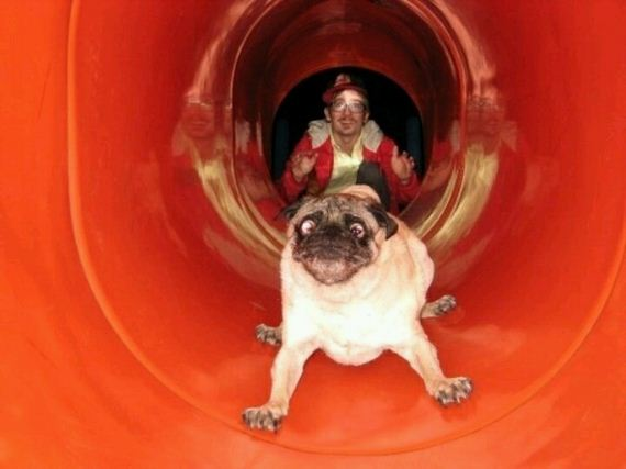 dog-fun-slide