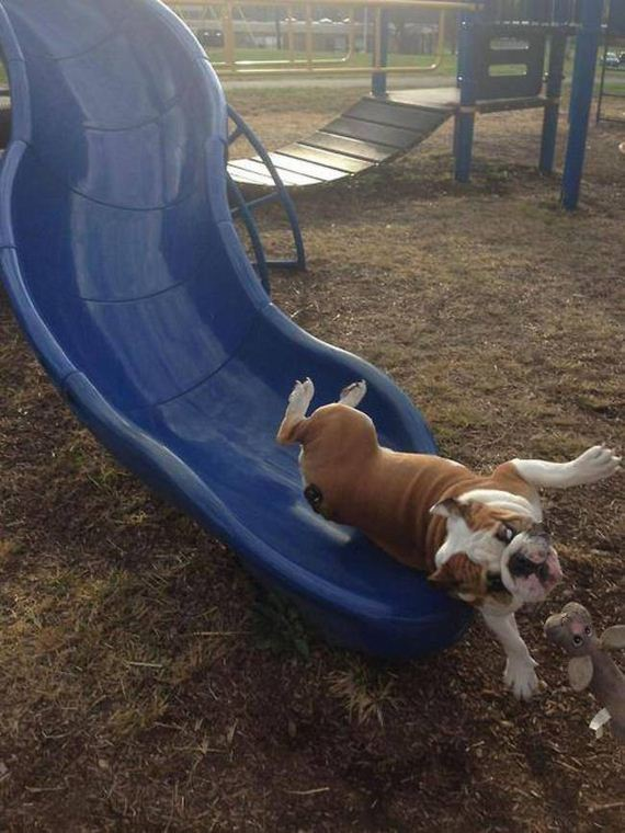 dog-fun-slide