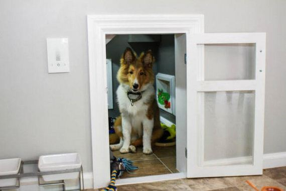 dog_is_living_like_harry_potter