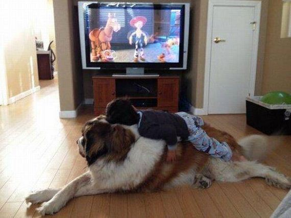 dog_pictures_10