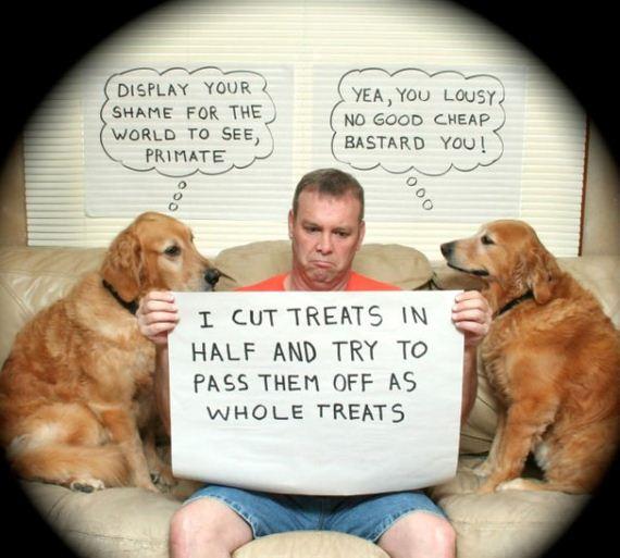 dog_shaming