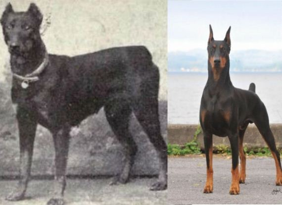 dogs_have_evolved