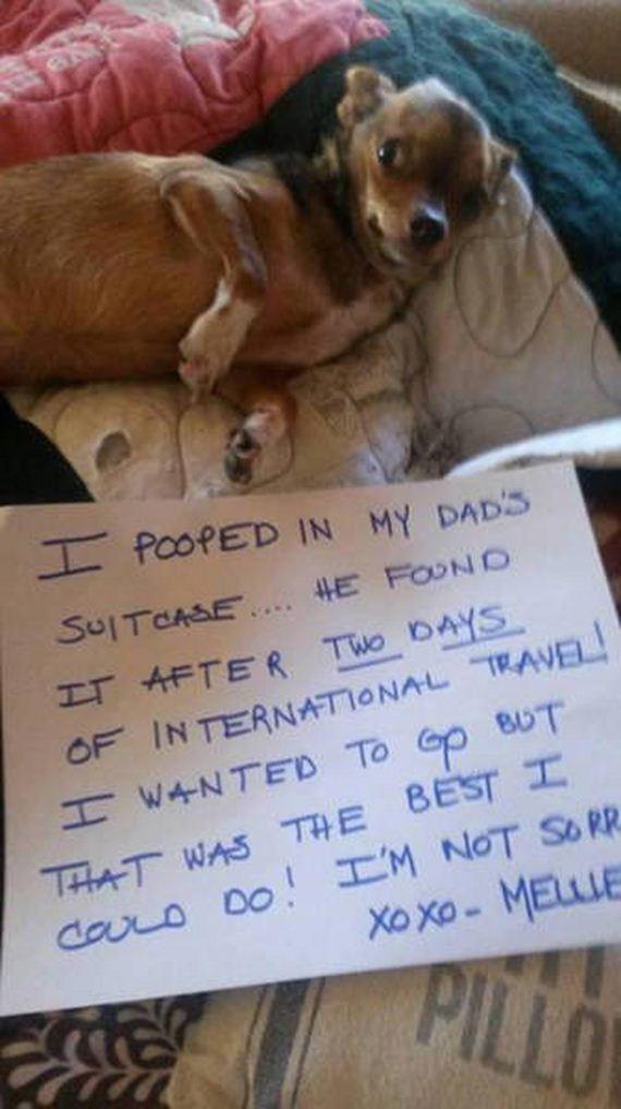 dogs_shame