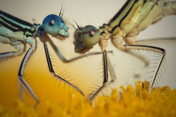 dragonfly-photography