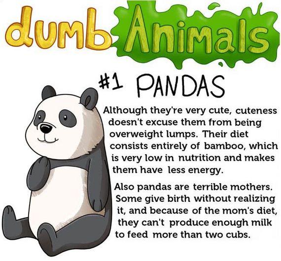 dumb_animals