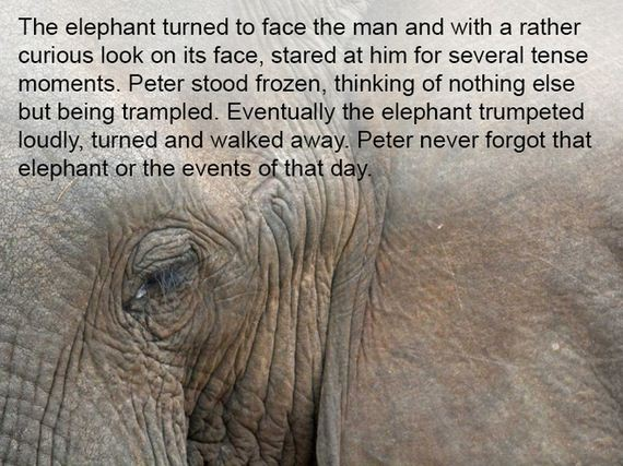 elephants_never_forget