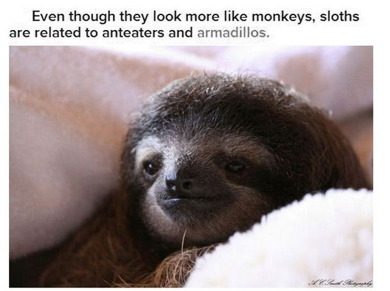 facts_about_sloths