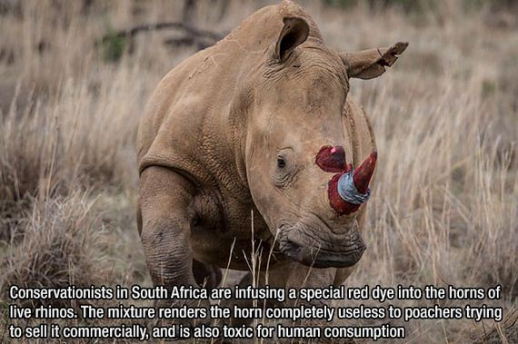 fascinating_facts-5