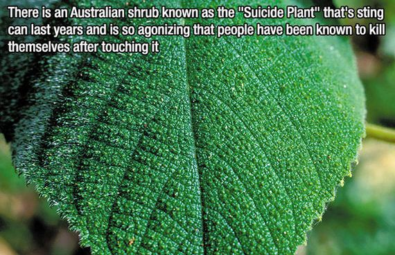 fascinating_facts-7