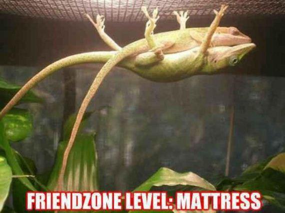 friend-zone
