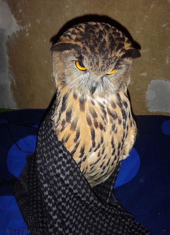 fun_owl