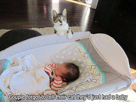funny-pictures-1016