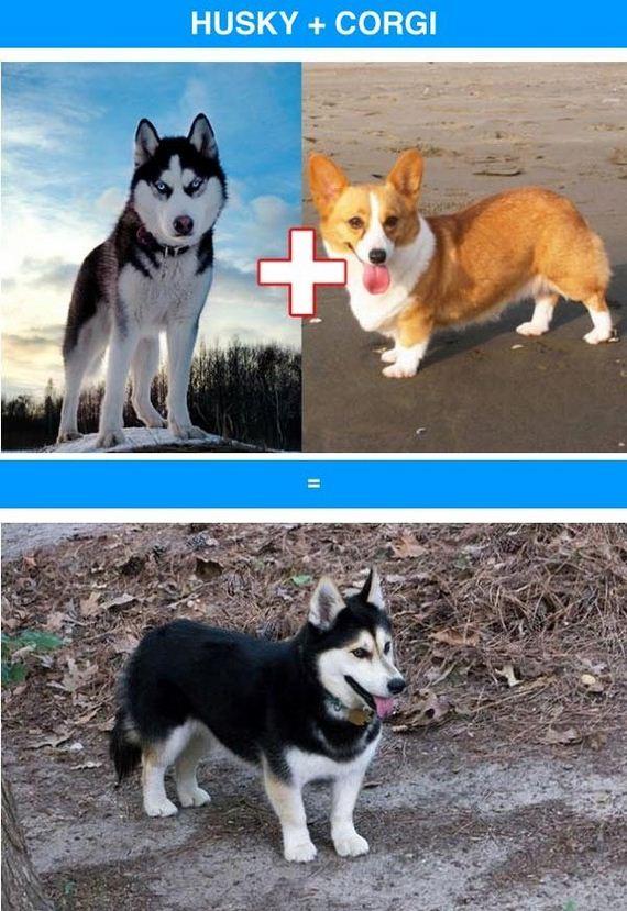 funny_cross_breeds