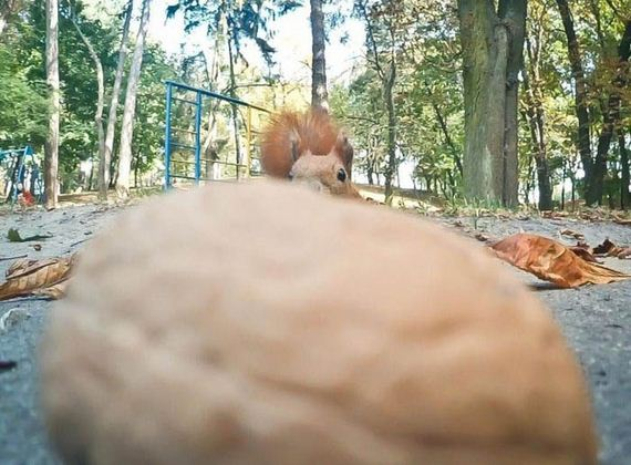 funny_squirrel