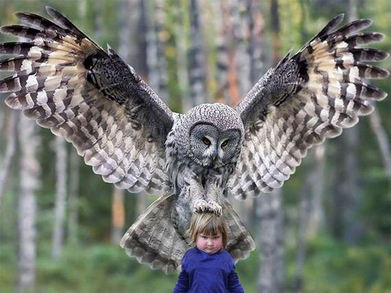 girl_holds_an_owl