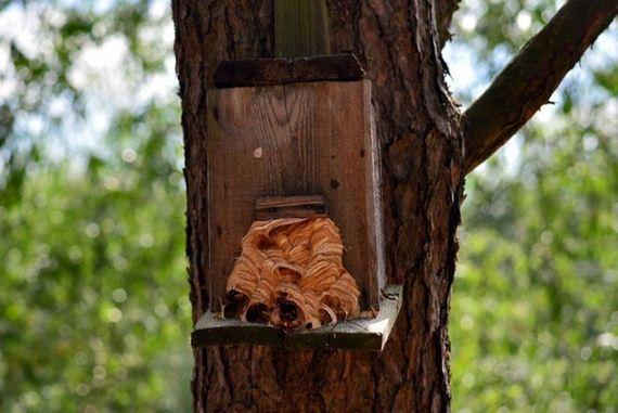 hornets_nest