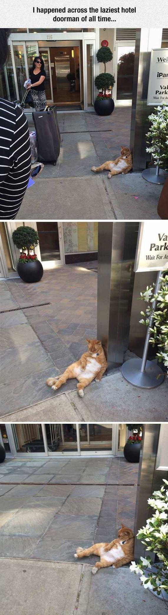 hotel_humor