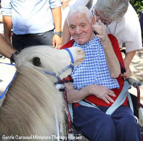 mini-horses-provide-therapeutic