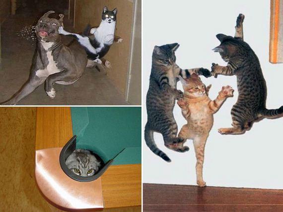 ninja_cats