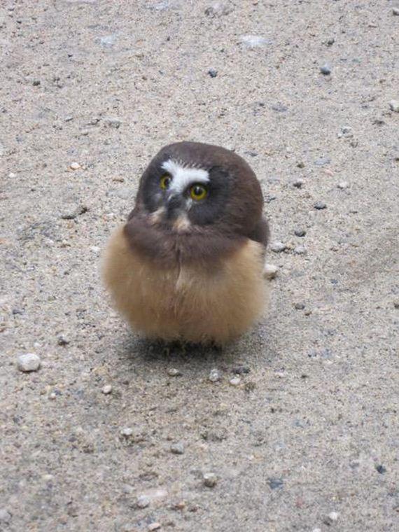 owl_police