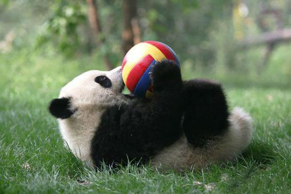 panda-daycare-is-an-actual