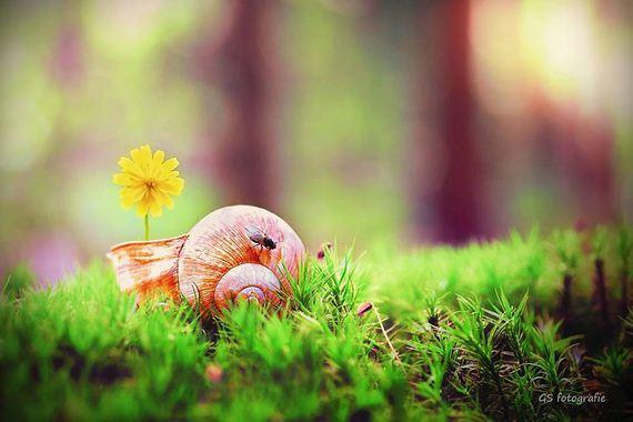 photography-snail