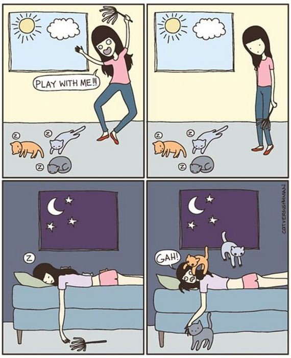 reality_of_owning_cat