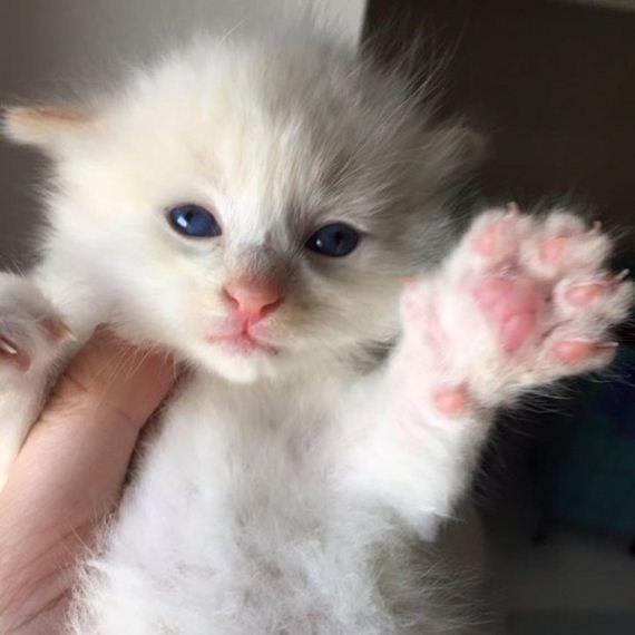 rock_kitten