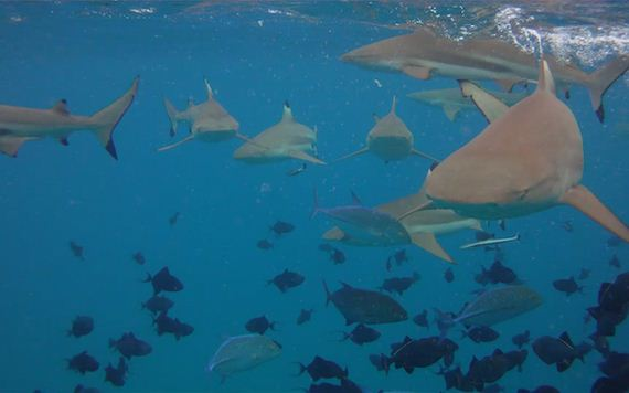 several-little-known-facts-about-sharks
