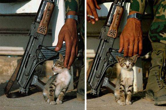 soldiers_and_cats