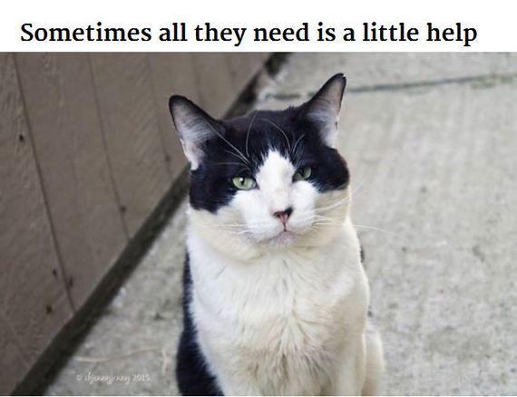 stray_cats_life