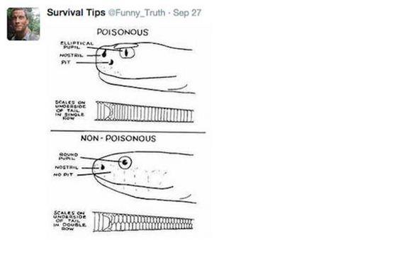 survival_tips