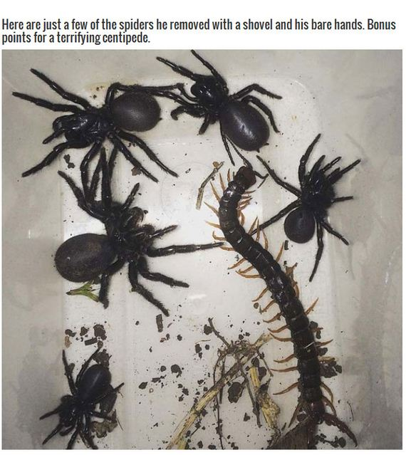 terrifying_spiders
