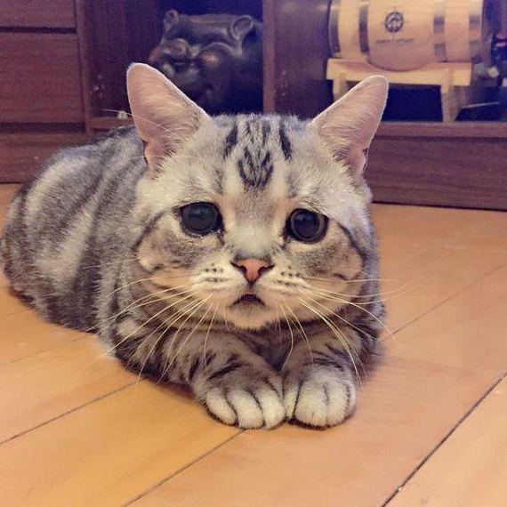 the-saddest-cat-on-the-internet