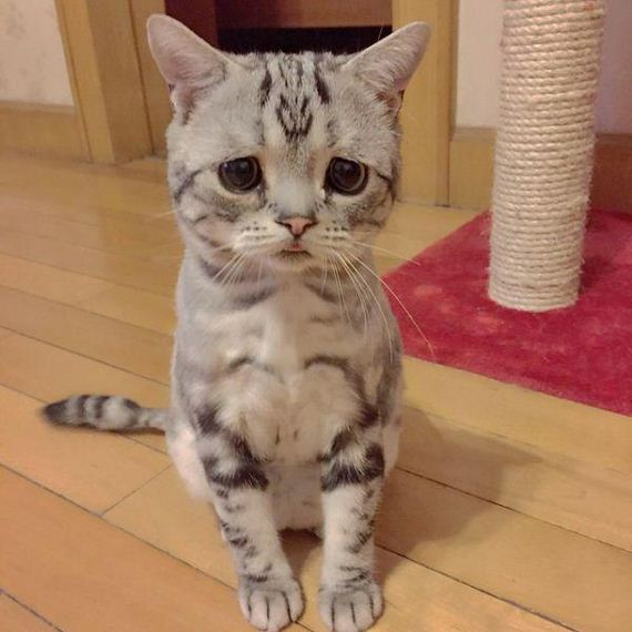the-saddest-cat-on-the-internet