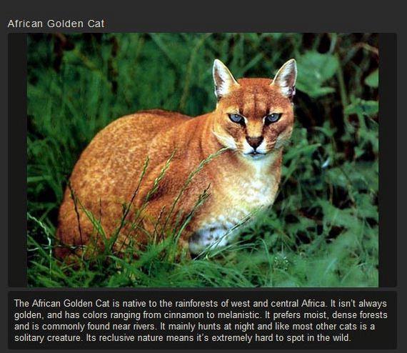 unusual_cat