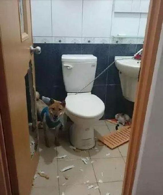 wc_dog