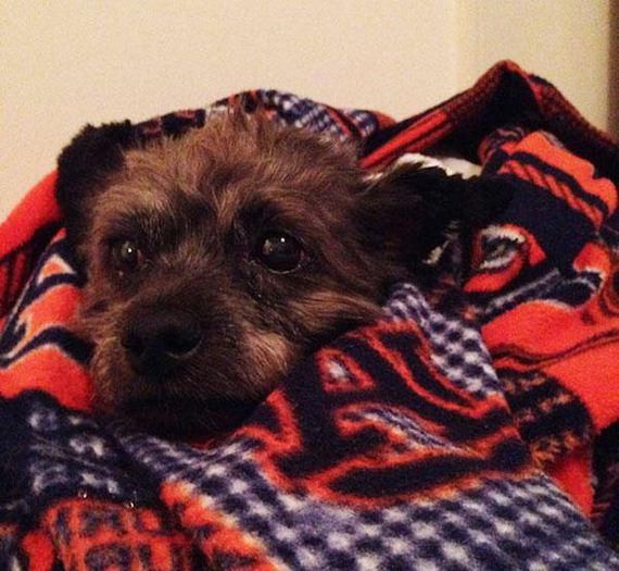 woman-adopts-abandoned-dying-dog
