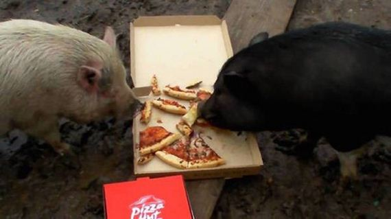 Animals-People-Food