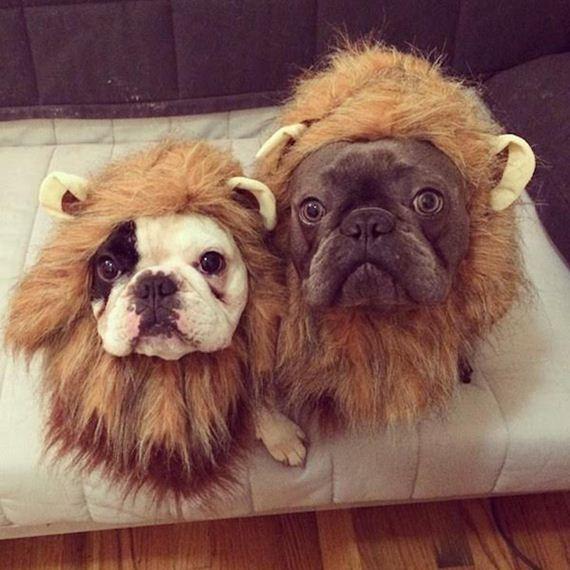 Dog-Needs-Halloween