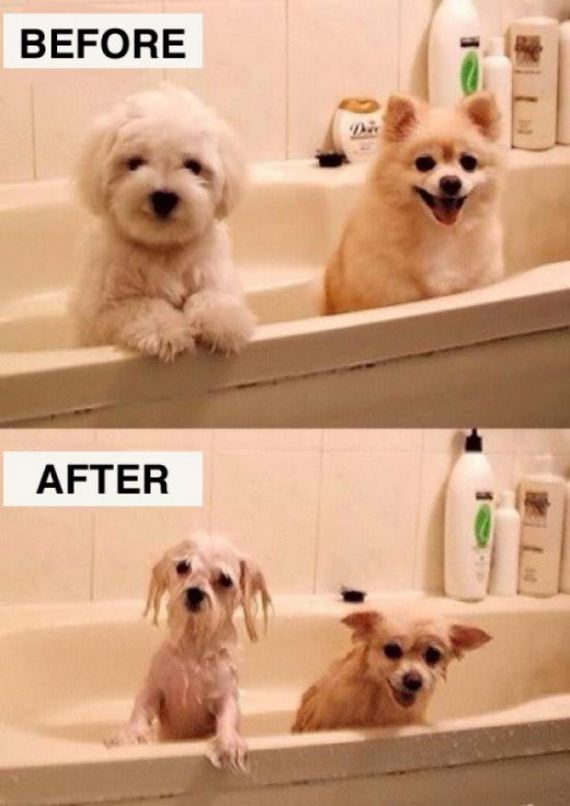 before_and_after