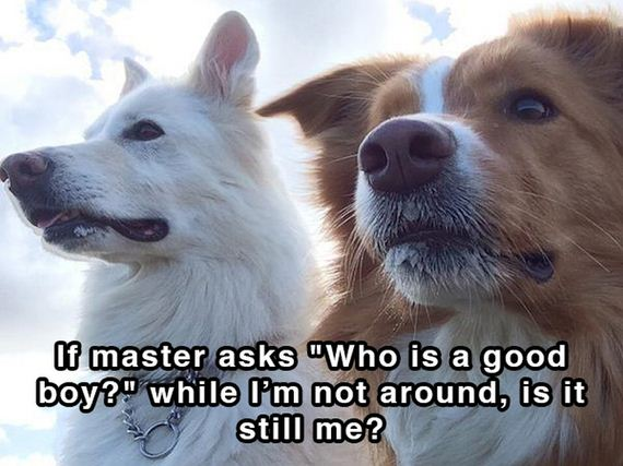 dog_shower_thoughts