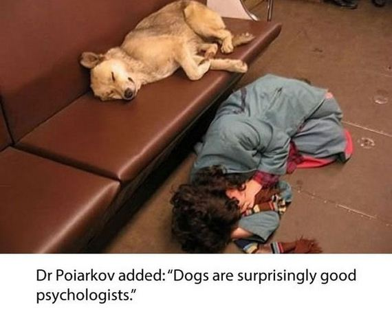 dogs_in_russia